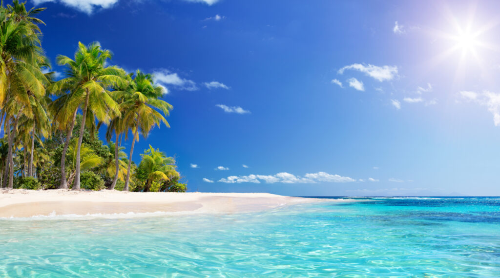 dreaming of travel, national plan for vacation day, national travel day, beach palm trees clear ocean.