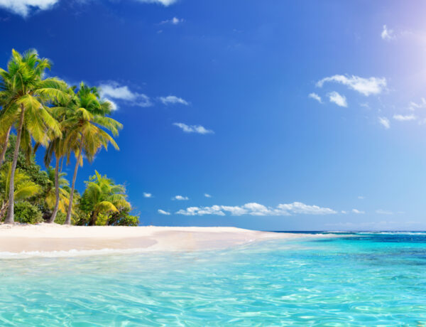 dreaming of palm trees and clear blue water